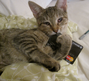 cat with credit card